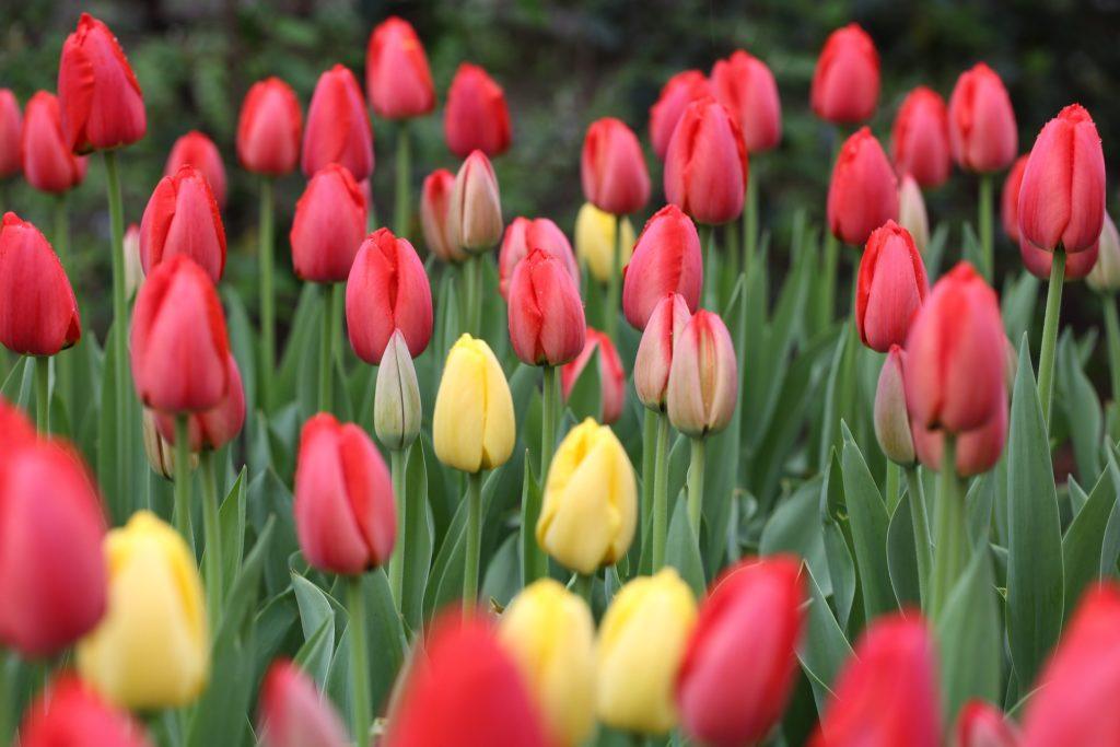 Wat hebben de lente en teksten met elkaar te maken? De lente is een perfect moment om je teksten op te frissen.
